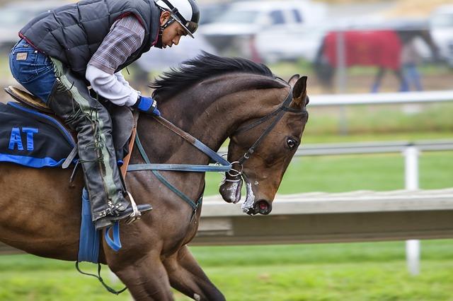 racehorse-419742_640