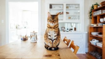 5 Reasons Landlords Refuse Pets in Rented Property