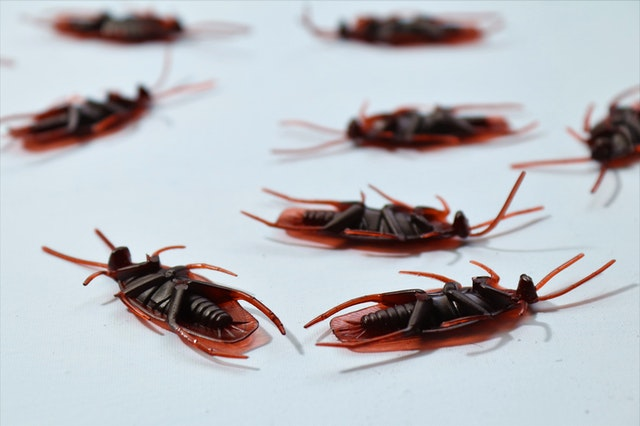4 Ways to Keep Your House Free of Pests and Insects